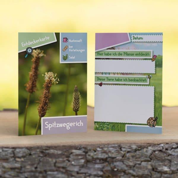 Entdeckerkarte Spitzwegerich