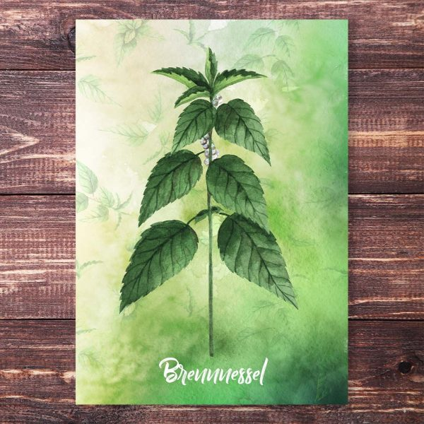 Postkarte Brennnessel