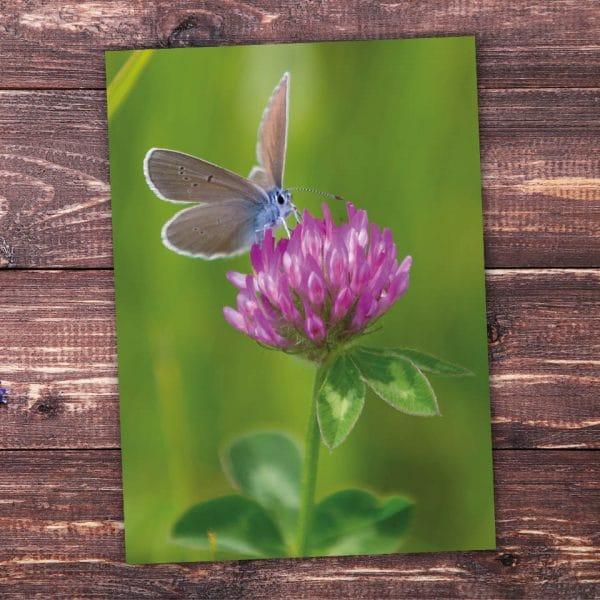 Postkarte Frühling