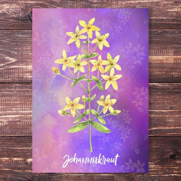 Postkarte Johanniskraut
