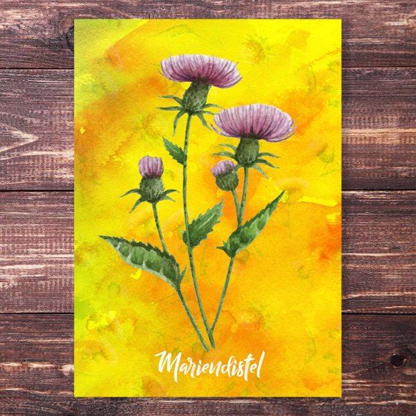 Postkarte Mariendistel