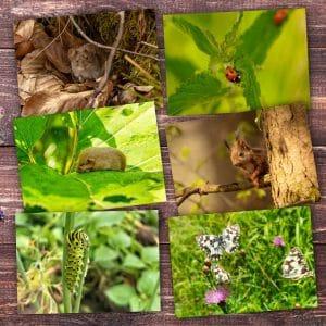 Postkartenset Kleine Tiere