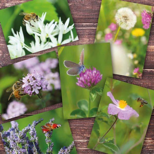 Postkartenset Frühling