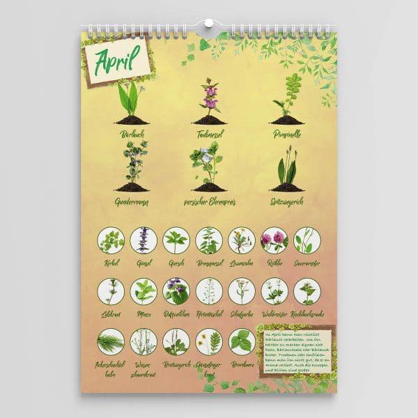 Saisonkalender für Kräuter