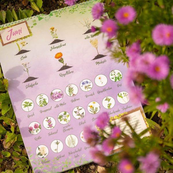 Monat Juni im Saisonkalender für Wildpflanzen