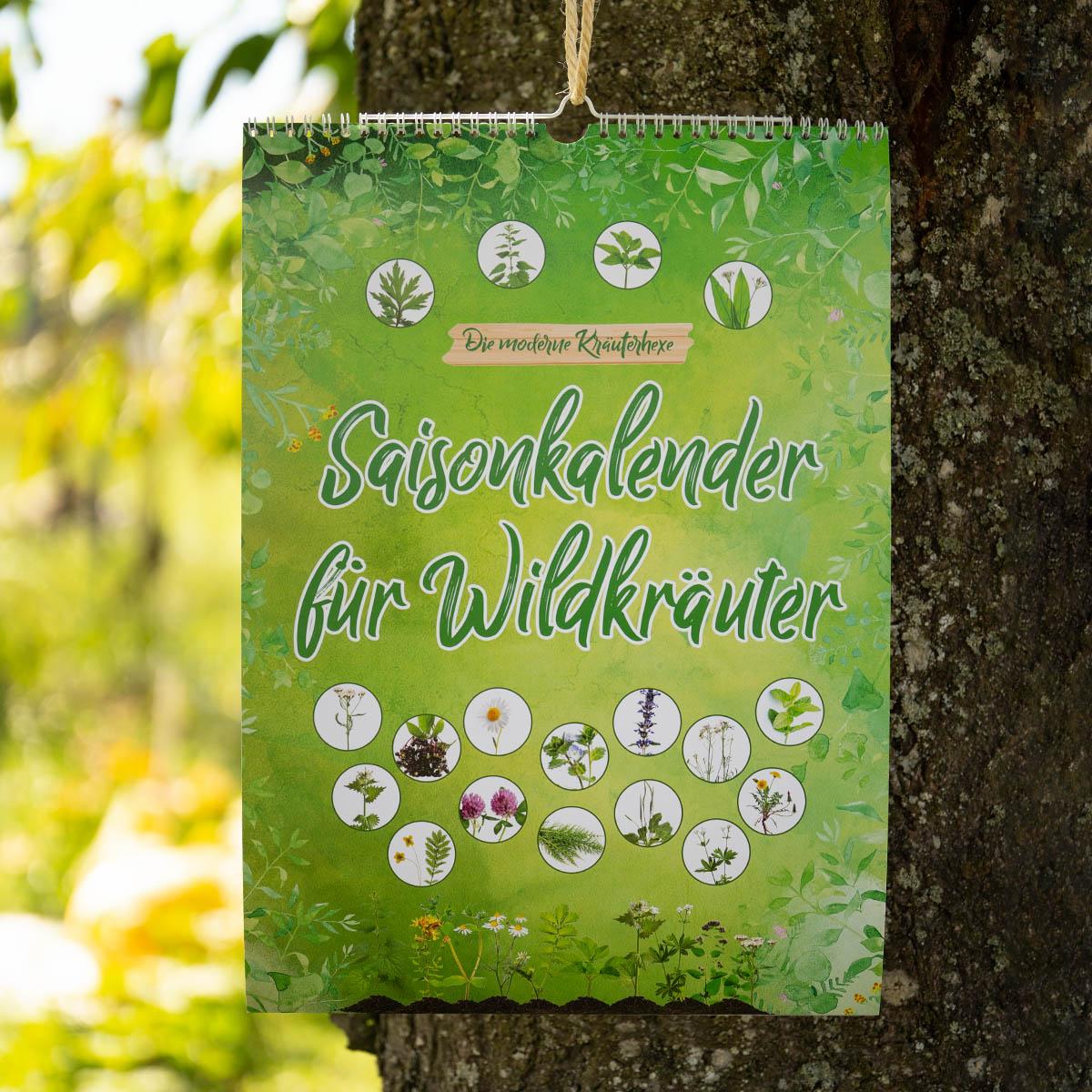 Saisonkalender für Wildkräuter - wann sollte man am besten Wildkräuter sammeln?