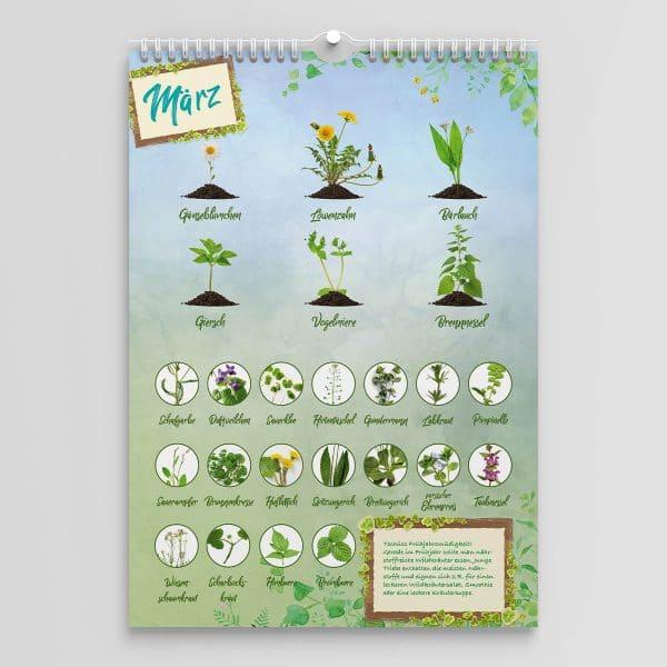 Wildkräuter Saisonkalender Monat März