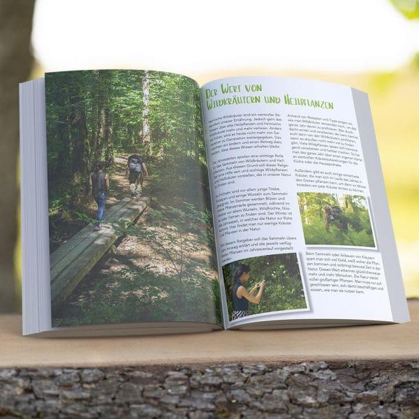Mit Wildkräutern und Heilpflanzen durchs ganze Jahr Hardcover